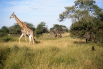 South Africa 380