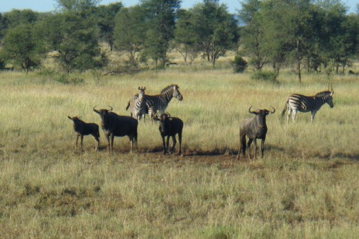 South Africa 381
